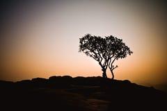 Baumschattenbild bei Sonnenaufgang Stockfoto
