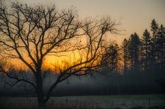Baumschattenbild bei Sonnenaufgang Stockbild