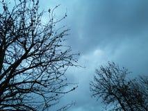 Baumschattenbild gegen den Himmel lizenzfreie stockbilder