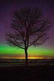 Baumschattenbild gegen sternenklaren Himmel mit etwas Nordlichtern Lizenzfreies Stockfoto