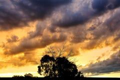 Baumschattenbild mit bewölktem Sonnenunterganghintergrund Stockbilder