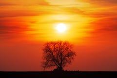 Baumschattenbild mit Sonne und rotem Himmel des orange Gelbs Stockfotos