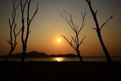 Baumschattenbild mit Sonne und rotem Himmel des orange Gelbs Lizenzfreie Stockfotografie