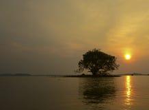 Baumschattenbild mit Sonne und rotem Himmel des orange Gelbs, Thailand Stockfoto