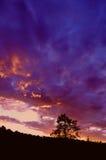 Baumschattenbild am Sonnenuntergang Stockfoto