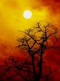 Baumschattenbild am Sonnenuntergang Stockbild