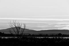 Baumschattenbild und -anlagen nahe einem See an der Dämmerung, mit weichen Tönen Stockfotografie