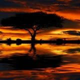 Baumschattenbild und drastischer Sonnenuntergang Stockfoto