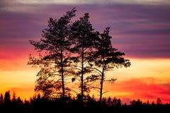 Baumschattenbild und schöne vibrierende Sonnenuntergangwolken Lizenzfreie Stockfotos