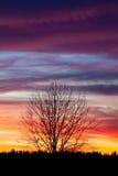 Baumschattenbild und schöne vibrierende Sonnenuntergangwolken Lizenzfreie Stockfotografie