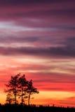 Baumschattenbild und schöne vibrierende Sonnenuntergangwolken Lizenzfreie Stockbilder