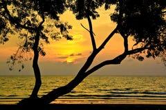 Baumschattenbild während des Sonnenuntergangs Stockbilder