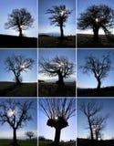 Baumschattenbilder Stockfoto