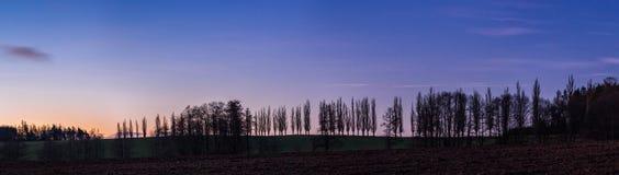 Baumschattenbilder auf dem Horizont bei Sonnenaufgang Stockfotos