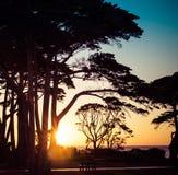 Baumschattenbilder bei Sonnenuntergang auf Küstenlandschaft Quadratisches Bild Lizenzfreie Stockbilder