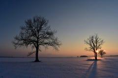Baumschattenbilder, bunter Wintersonnenuntergang Stockbilder