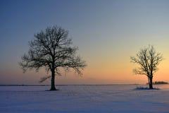 Baumschattenbilder, bunter Wintersonnenuntergang Stockfotografie
