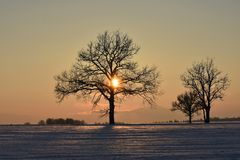 Baumschattenbilder, bunter Wintersonnenuntergang Stockfotos