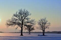 Baumschattenbilder, bunter Wintersonnenuntergang Lizenzfreies Stockbild