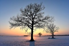 Baumschattenbilder Die helle rote Sonne über Oberseiten der Pelzbäume Stockbild