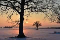 Baumschattenbilder Die helle rote Sonne über Oberseiten der Pelzbäume Lizenzfreies Stockfoto