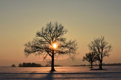 Baumschattenbilder Die helle rote Sonne über Oberseiten der Pelzbäume Lizenzfreie Stockfotografie