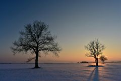 Baumschattenbilder Die helle rote Sonne über Oberseiten der Pelzbäume Lizenzfreie Stockfotos
