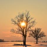Baumschattenbilder Die helle rote Sonne über Oberseiten der Pelzbäume Stockfoto