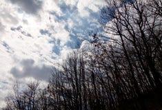 Baumschattenbilder in einem Himmel mit vielen Wolken Stockfoto