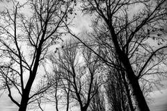 Baumschattenbilder in einem Stadtpark Lizenzfreie Stockbilder