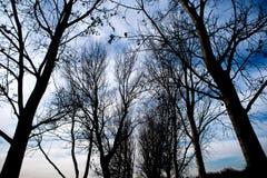 Baumschattenbilder in einem Stadtpark Stockbilder