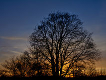 Baumschattenbilder gegen bunten Himmel Stockfoto