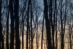 Baumschattenbilder gegen Sonnenunterganghimmel Lizenzfreie Stockfotos
