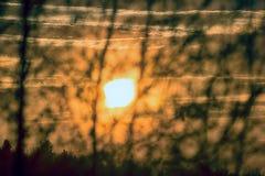 Baumschattenbilder gegen Sonnenunterganghintergrund Stockfoto