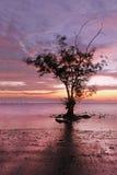 Baumschattenbilder hinter Sonnenuntergang Stockfoto