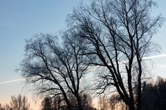Baumschattenbilder nach Sonnenuntergang Stockbild