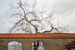 Baumschattenbilder ohne Blätter hinter alter Weinlese entsteinen Fenn Stockfotos