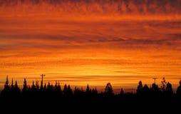 Baumschattenbilder am orange Licht des Sonnenuntergangs Lizenzfreies Stockbild