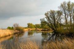 Baumschattenbilder reflektierten sich in der Wasseroberfläche des Teichs Lizenzfreie Stockfotografie