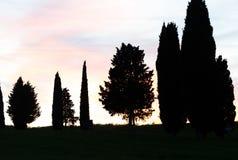 Baumschattenbilder in Toskana bei Sonnenuntergang Stockfoto