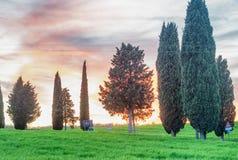 Baumschattenbilder in Toskana bei Sonnenuntergang Lizenzfreies Stockfoto
