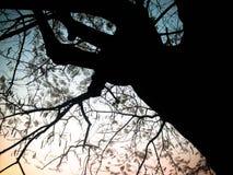 Baumschattenbilder und Himmelhintergrund Lizenzfreie Stockfotos