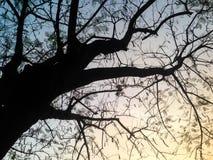 Baumschattenbilder und Himmelhintergrund Lizenzfreie Stockfotografie