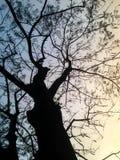 Baumschattenbilder und Himmelhintergrund Stockfotos