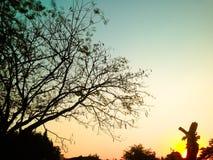 Baumschattenbilder und Himmelhintergrund Stockbild