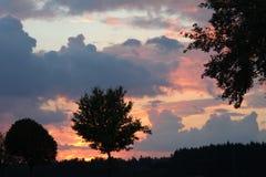 Baumschattenbilder und szenischer Sonnenunterganghimmel Stockfotografie