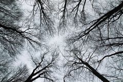 Baumschattenbilder von Boden zu Himmel Stockfoto