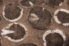Baumscheiben eingebettet in einem Weg Stockfotografie