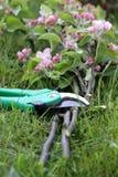 Baumschere mit Apfelzweigen Stockbild