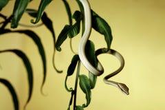 Baumschlange auf Farn lizenzfreies stockfoto